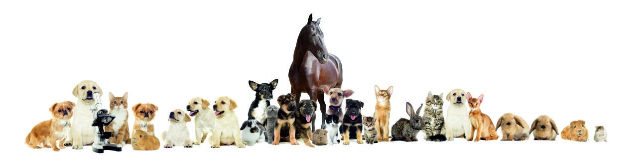 veterinamartin3